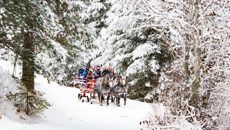 Western Pleasure sleigh ride