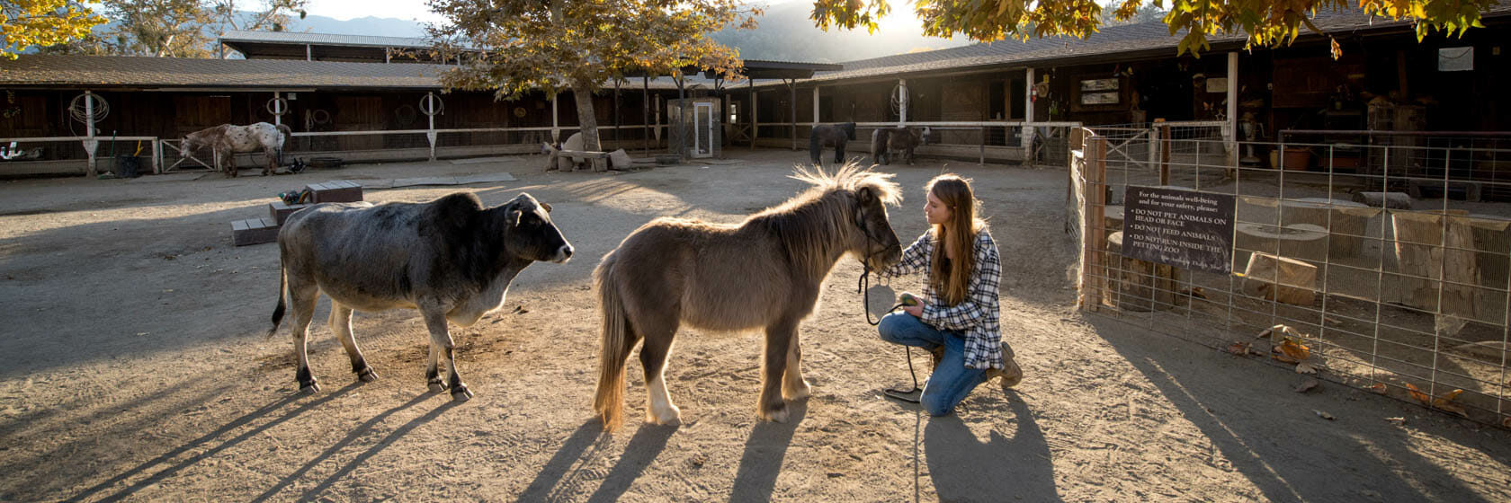 Girl kneeling to pet a miniature horse