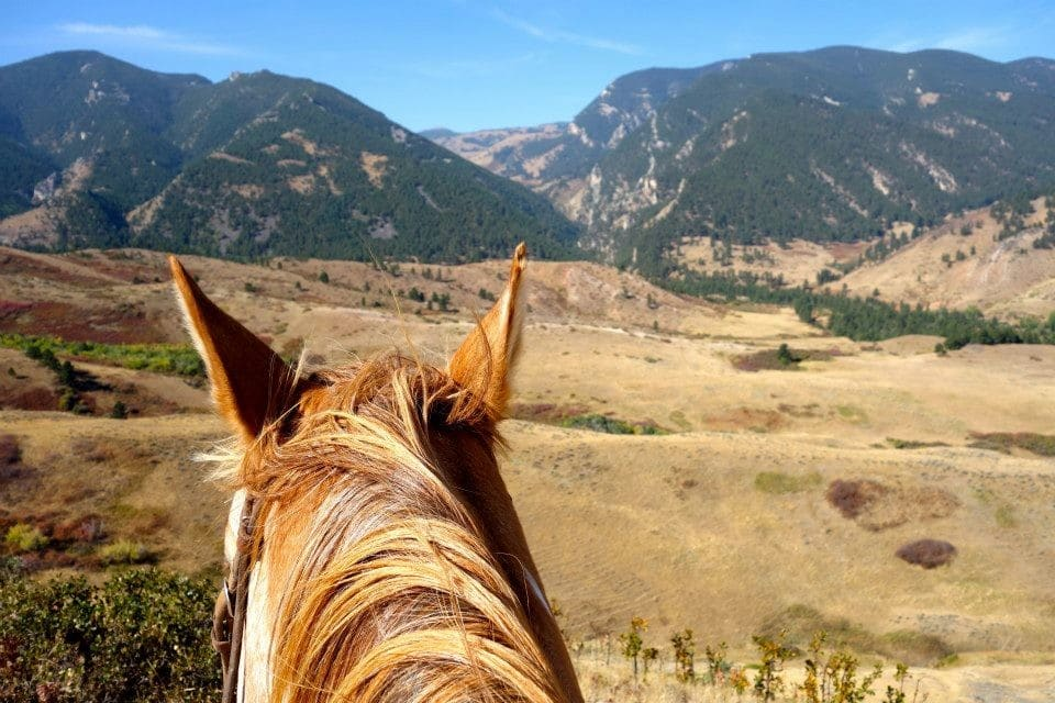 horses ears and mountains