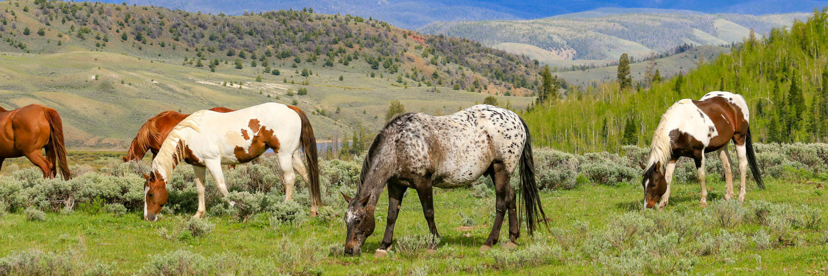 Horses grazing in a field near mountains