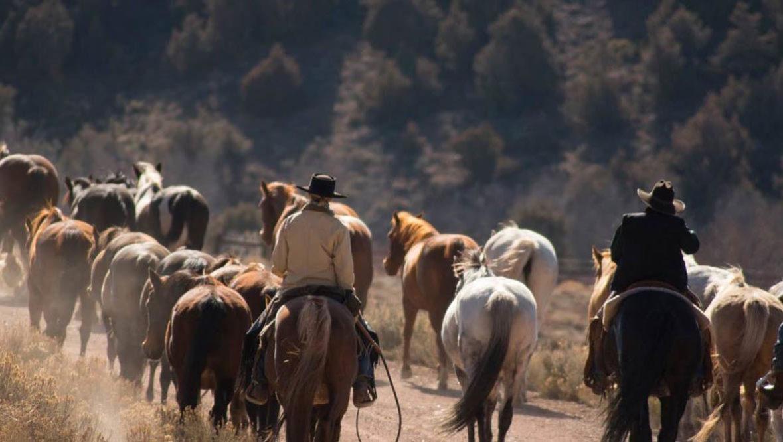 Cattle drive at Latigo Dude Ranch