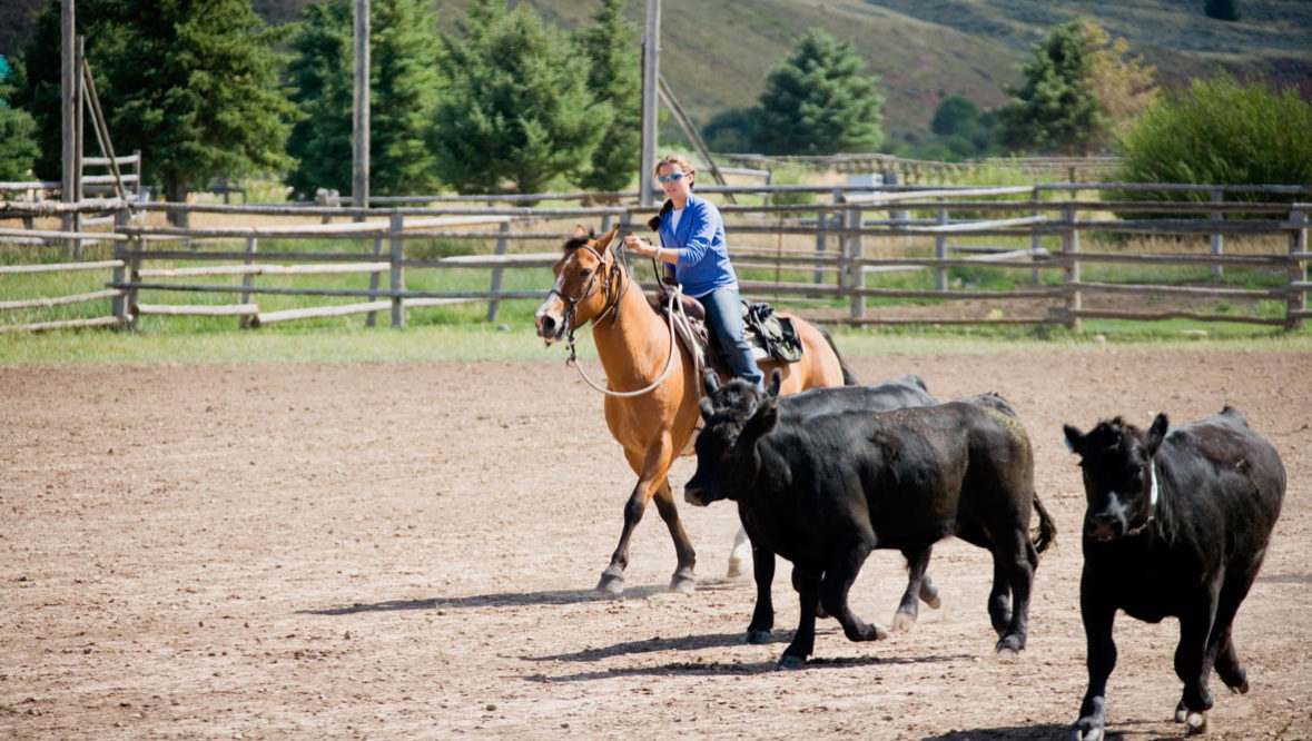 Red Rock Ranch cattle drive