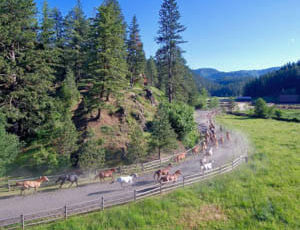 Horse herd running at Red Horse Mountain Ranch