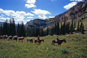JJJ WIlderness Hunting & PackTrip