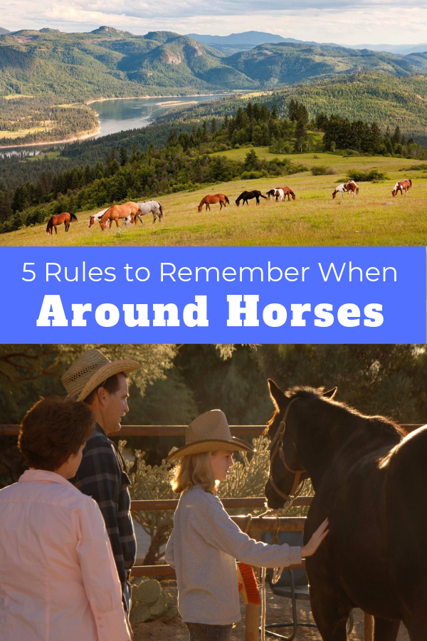 There is nothing quite like the feeling you get when you are around horses. Continue reading to learn about five rules to remember when being around horses.