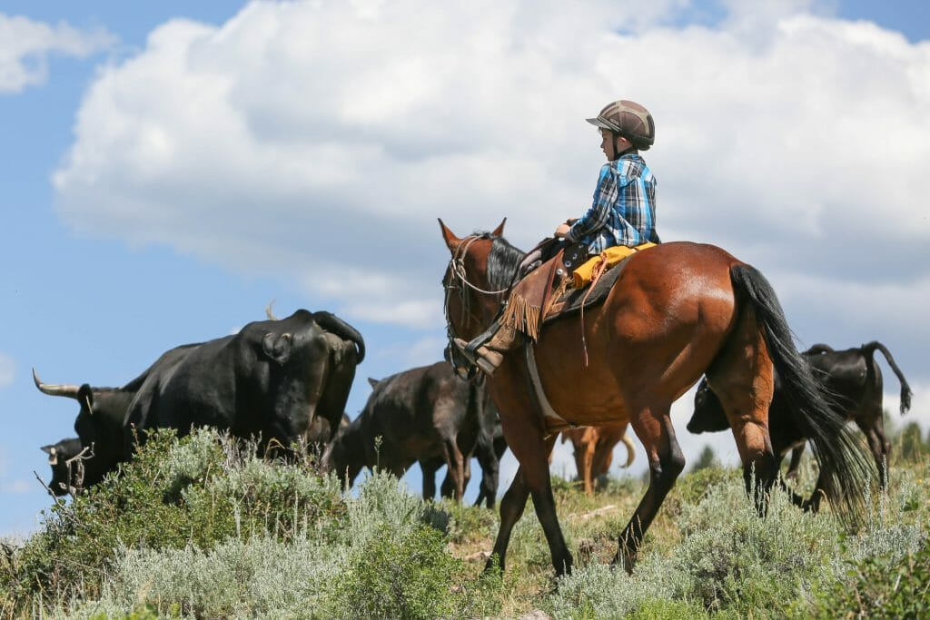 Black Mountain Cattle Drive with Kids