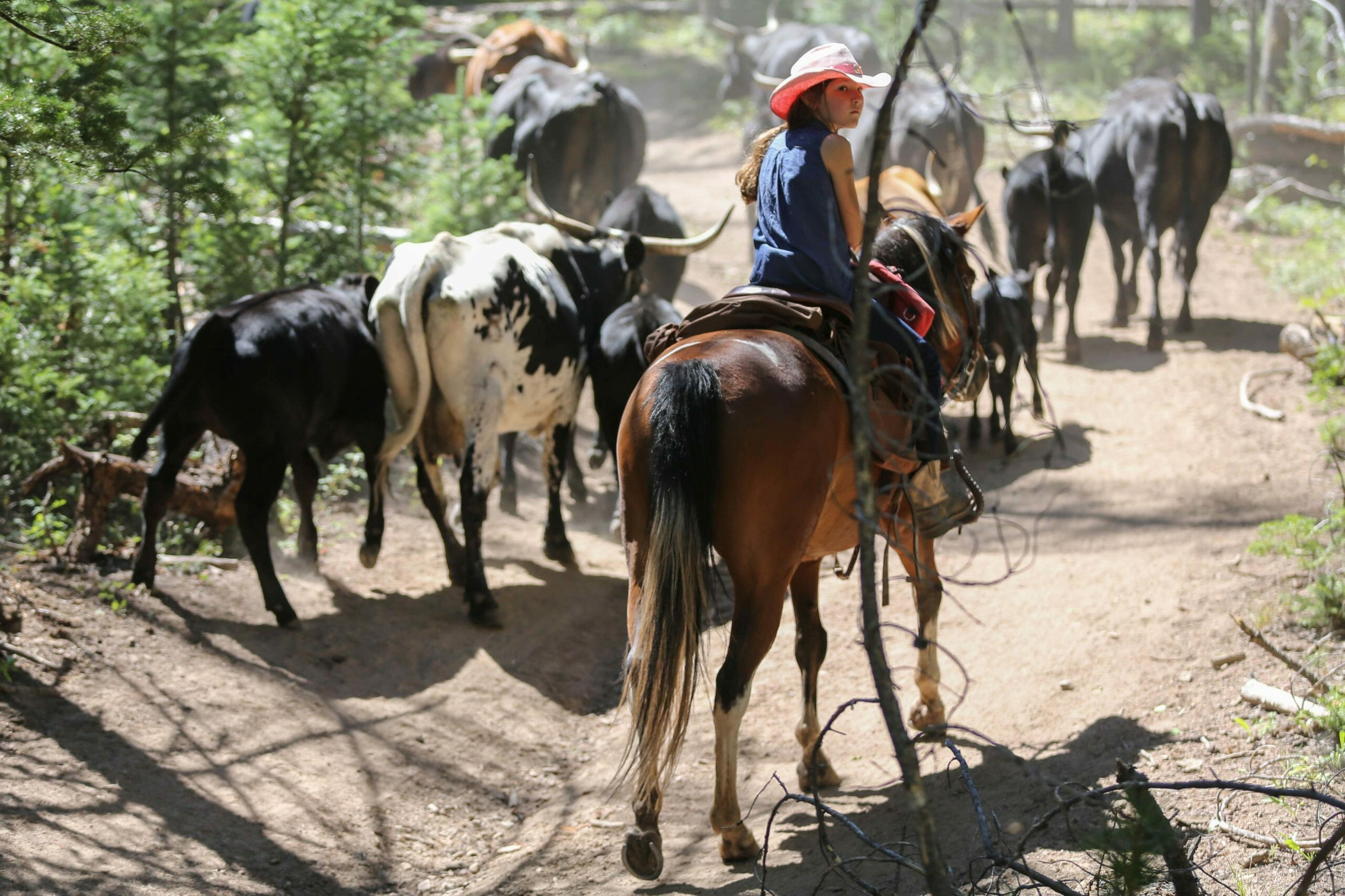 Black Mountain Ranch Cattle Drive