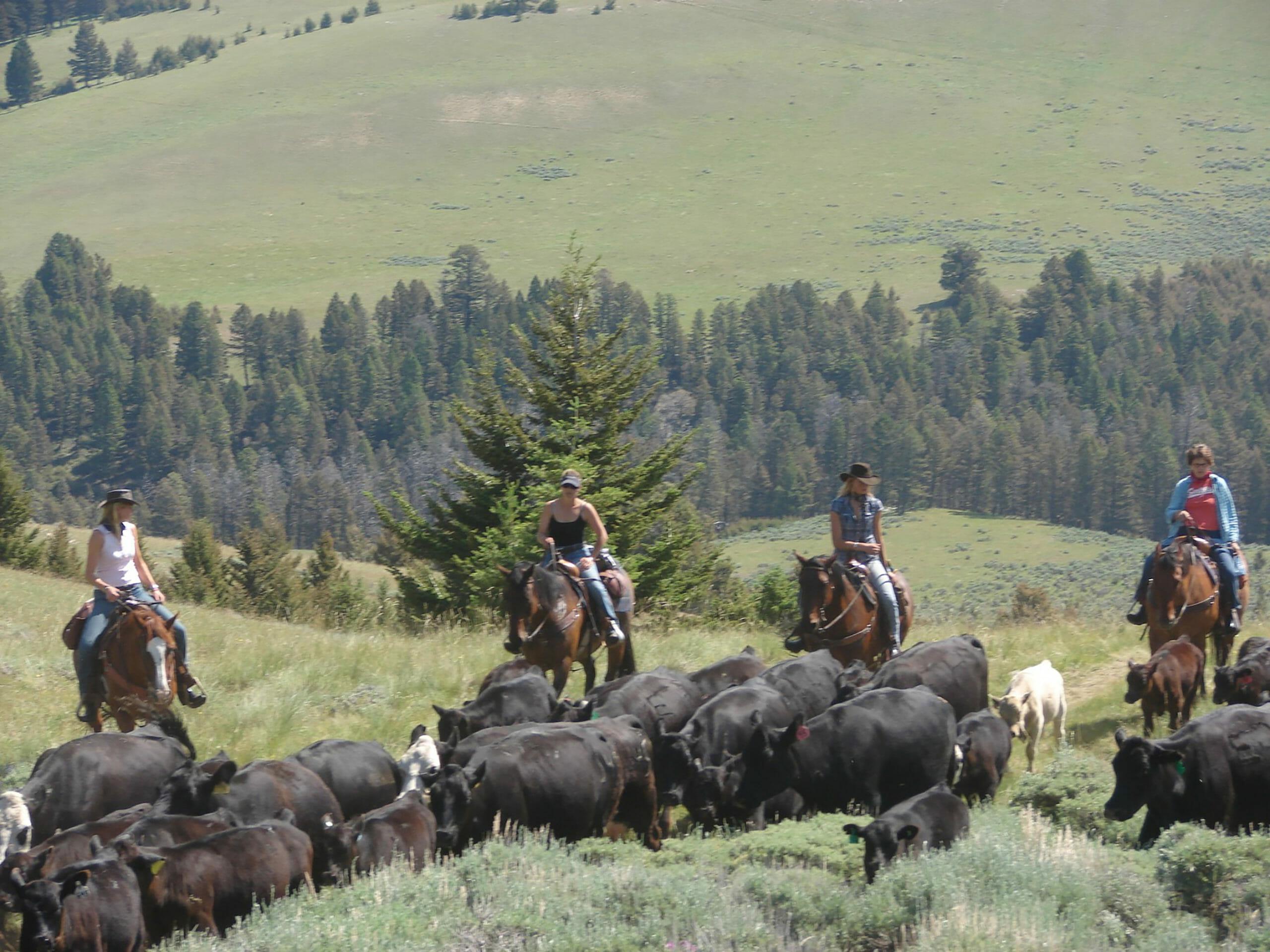 Dude Ranch Activities