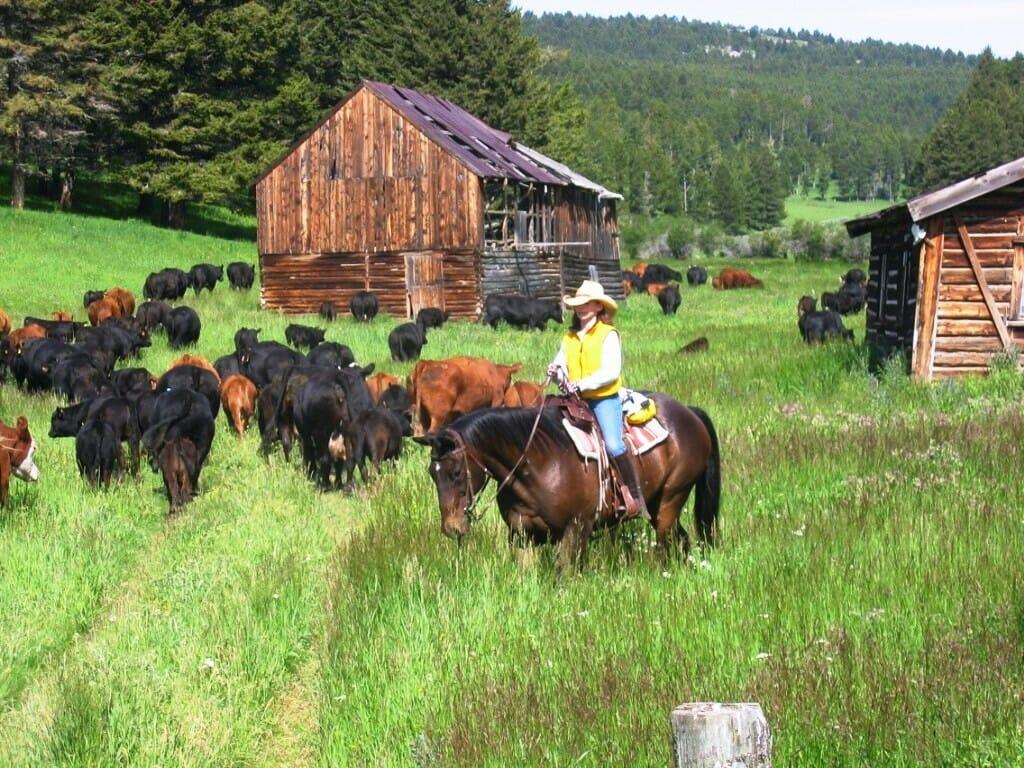 Bonanza Cattle Lodge