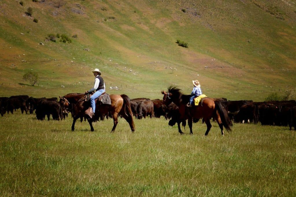 Bull Hill Cattle Drive Kids