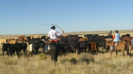 working cattle ranch vacations