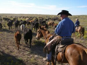 Burnt Well Guest Ranch is a low altitude working cattle and sheep ranch in Roswell, New Mexico