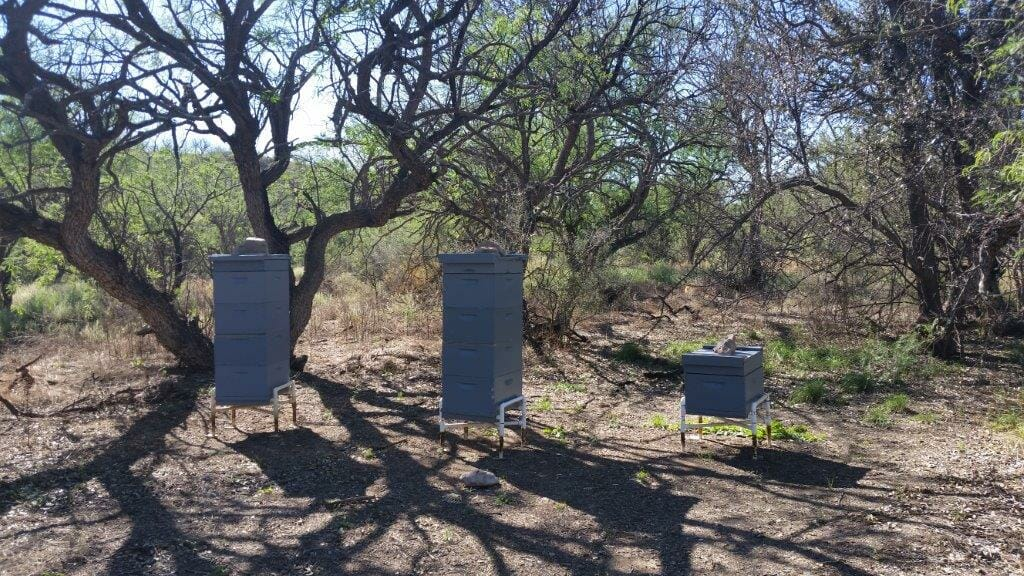 Circle Z Bee Hive Farm to Table