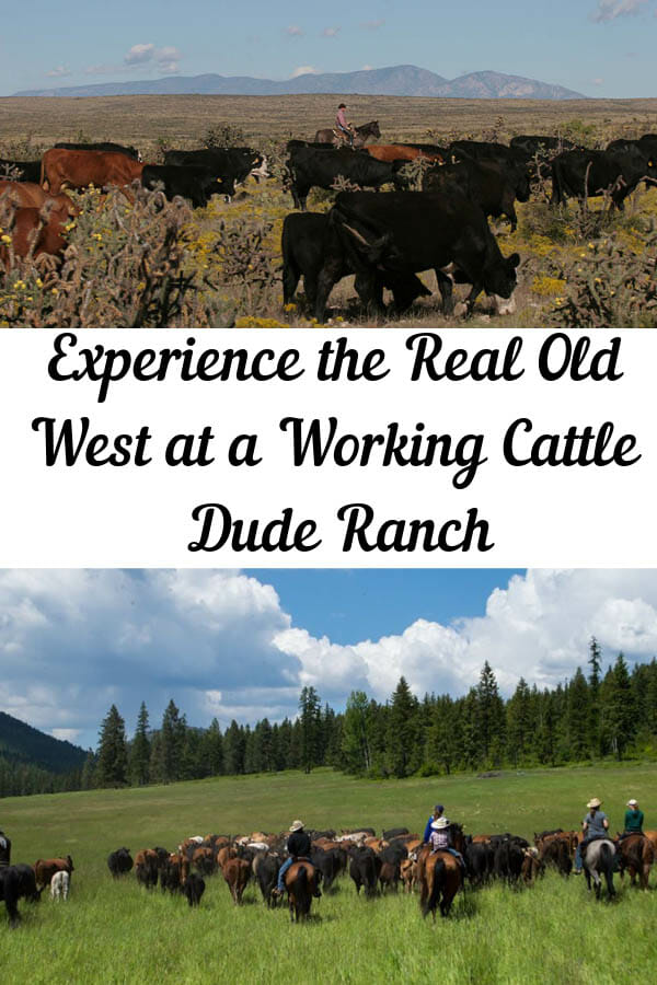 """Have you ever dreamt about riding across the plains or through the desert pushing cattle, hootin' and a hollerin' from the back of a horse? At a working cattle dude ranch, you will get to experience what the real west used to be and how """"the real cowboys"""" used to live."""