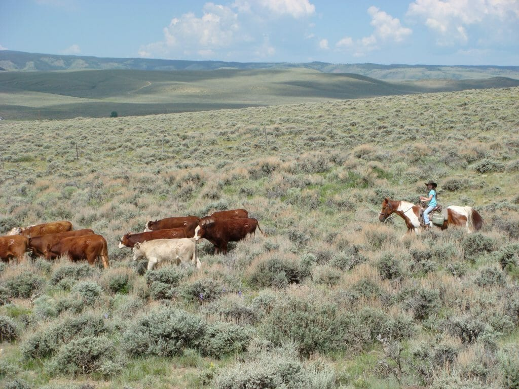 Laramie River Ranch Cattle Drive with Kids