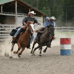 Paradise Ranch Horses