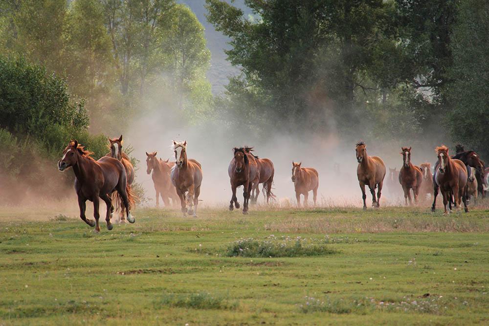 dude ranch vacations