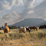 Hawley Mountain Ranch