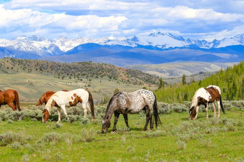 Horseback riding packing tips