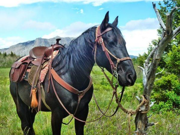 JJJ Wilderness Ranch offers Bob Marshall Wilderness Adventures