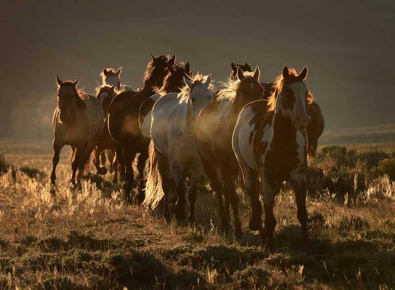 Laramie-River-Sunrise-Gather  Eco-tourism