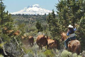 Long Hollow Ranch Summer Travel Destination