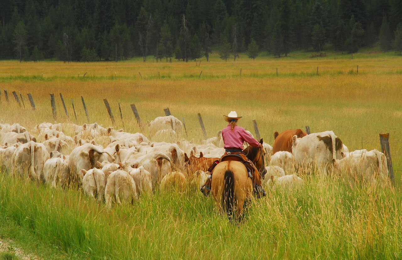 McGinnis Meadows Cattle Drive