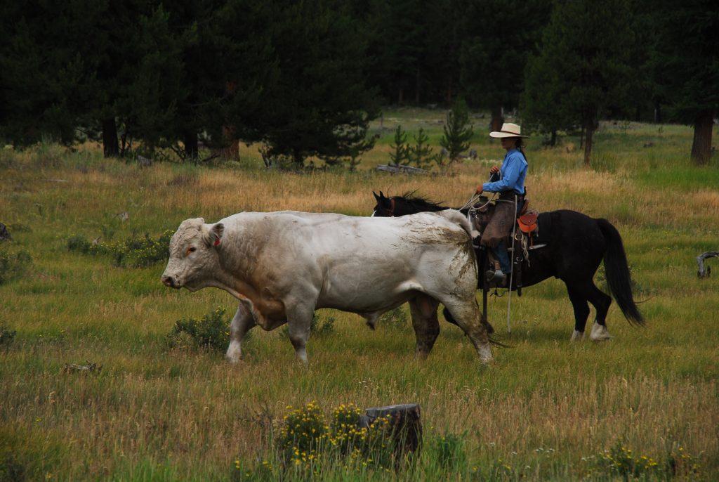 McGinnis Meadows Advanced Horseback Riding