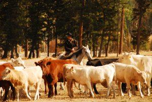 McGinnis Meadows Cattle & Guest Ranch Libby MT Horsemanship