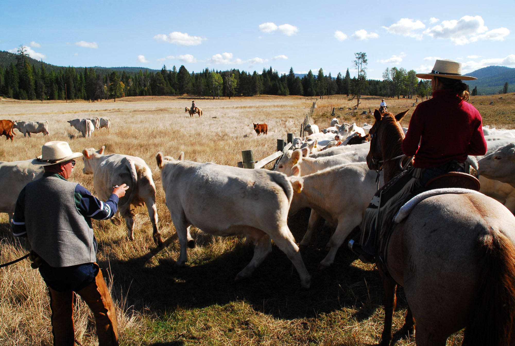 McGinnis Meadows Cattle & Guest Ranch Riding Lessons