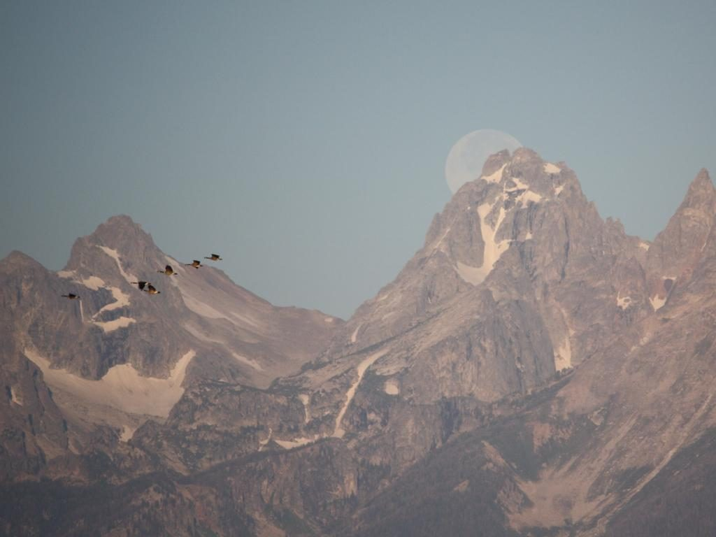 Moose Head Tetons to View the Eclipse