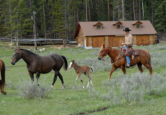Nine Quarter Circle Ranch Baby Foal