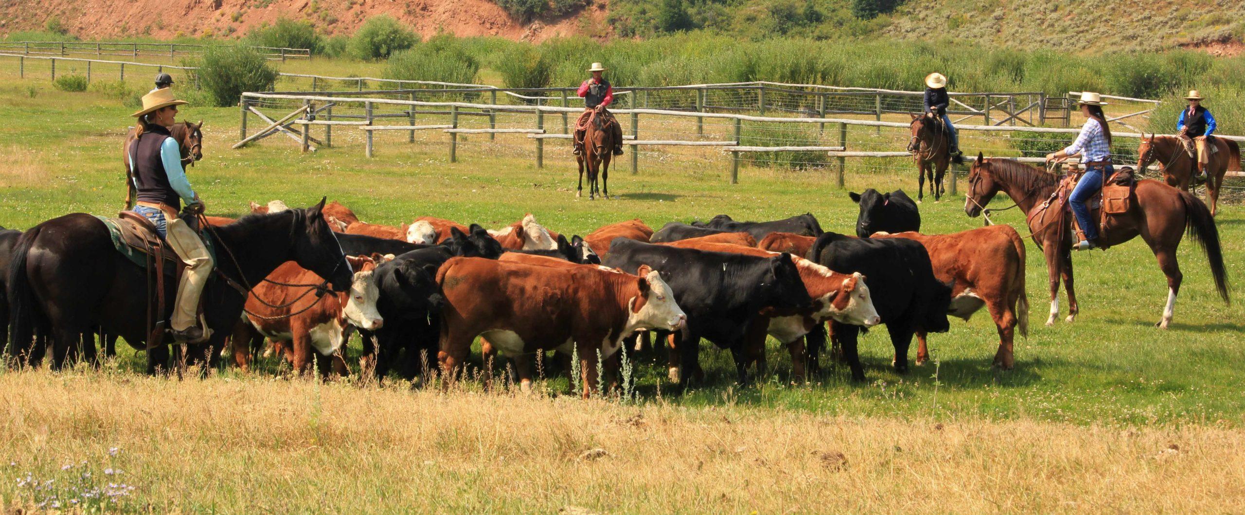 Red Rock Ranch Cattle Work Horsemanship