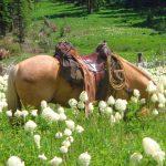 Rich Ranch in Montana