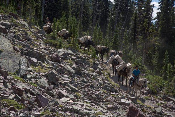RIch Ranch offers Bob Marshall Wilderness Adventures