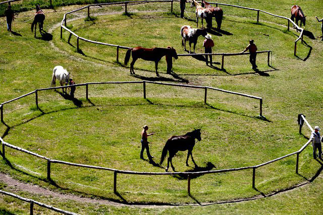 horseback riding lessons and clinics