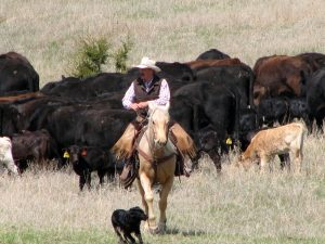 Rowses All-American Cattle Ranch