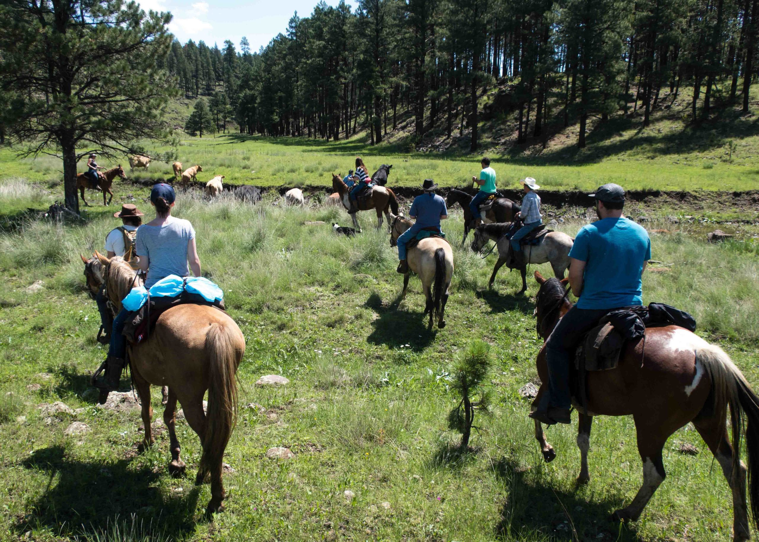 Sprucedale Cows Cattle Drive Family Vacation Ideas-1