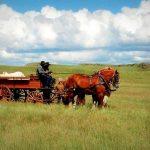 Sweet Grass Ranch Montana Frontier