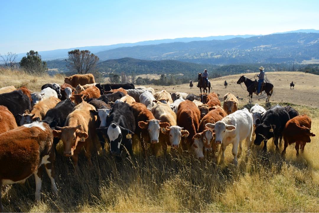 V6 California Dude Ranch