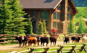Vista-Verde-Drive-Cattle