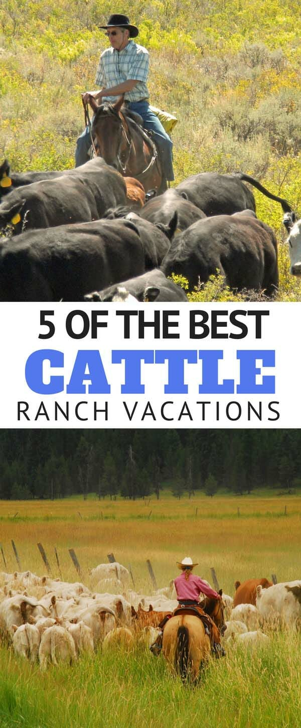 working-cattle-ranch-vacations-and-cattle-drives