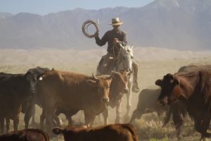 Bring Your Own Horse on a Zapata Ranch Cattle Drive
