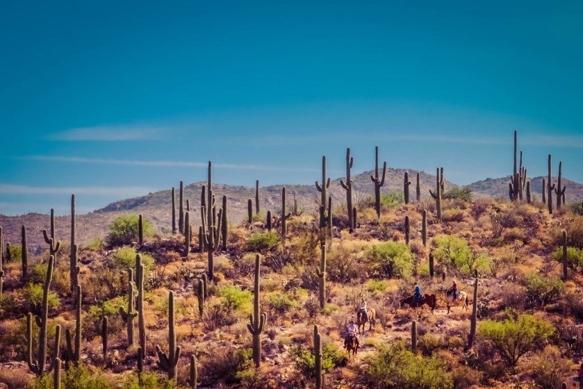 A cactus covered landscape with blue sky