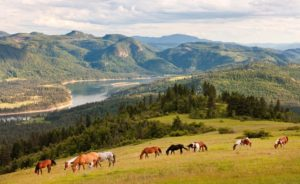 Horses with mountain view