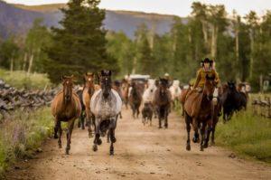 Rawah Ranch Vacations Horses Running