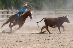 Bar W cattle Roping