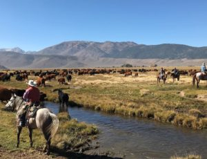 Hunewill Cattle Drive Fall