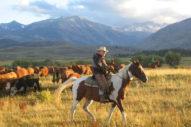 Hunewill Cattle Fall Paint Horse